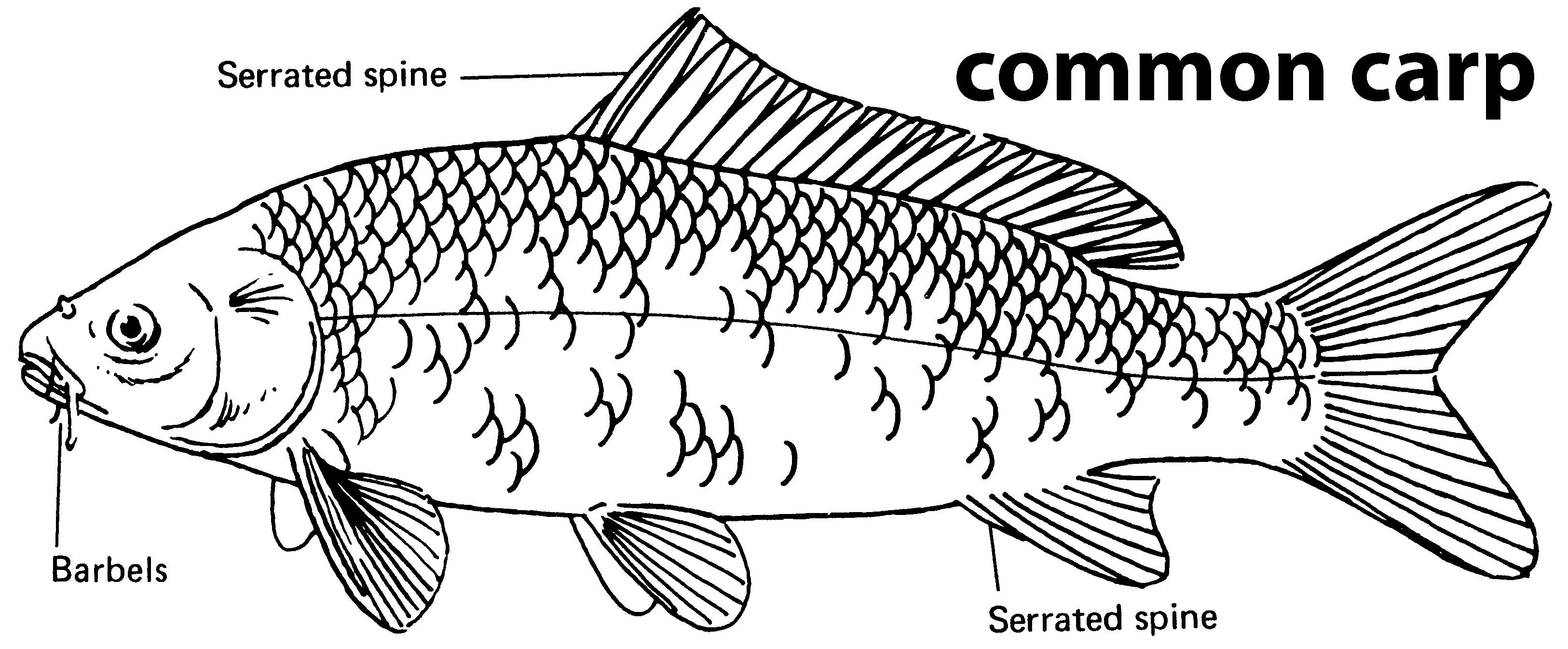 Iowa Fish Species