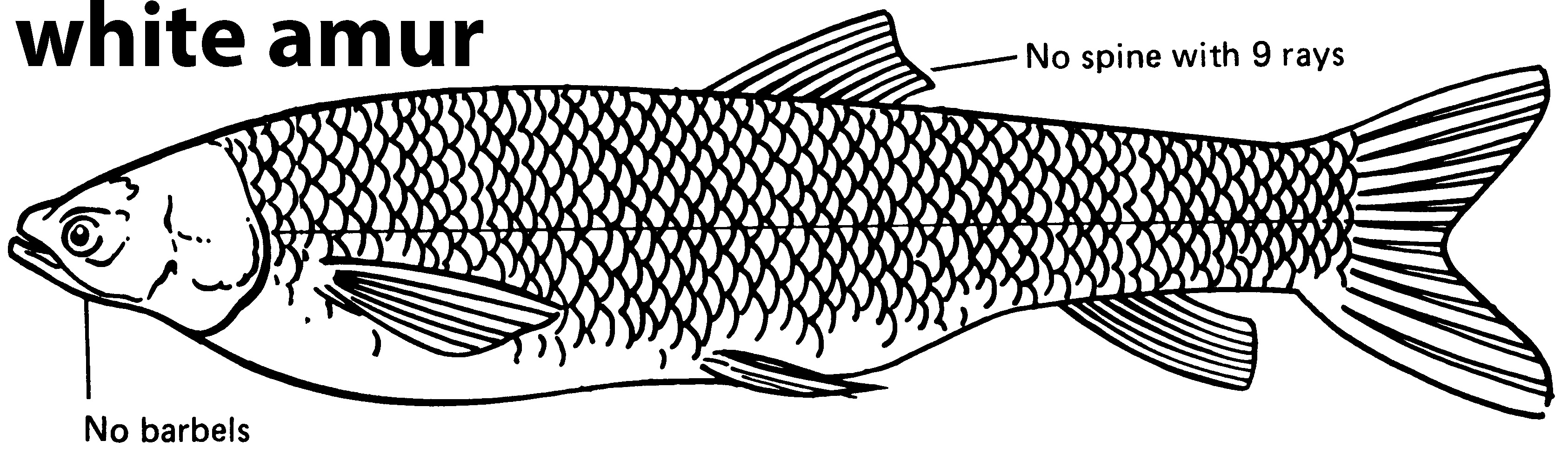 The Fish Discipline | Teaching Kids Systems Thinking | Introduction — Ahmad  Fahmy