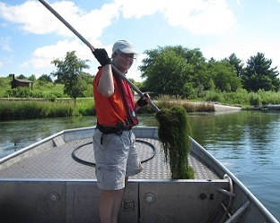A fisheries biologist monitoring aquatic vegetation for a research project.