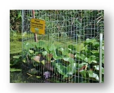 veg in fencing