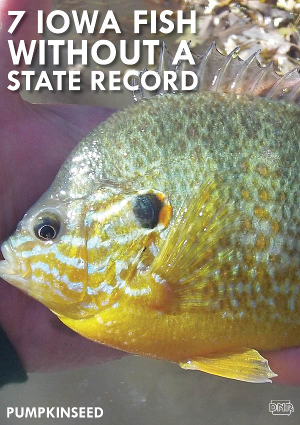 Be the first in the history books by catching one of these 7 Iowa fish species without a current state record! | Iowa DNR