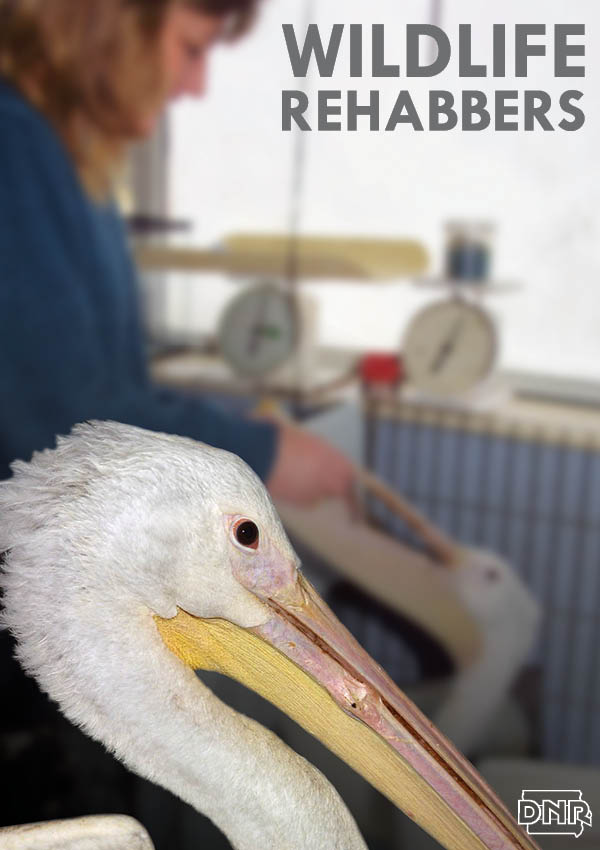 Here's what it takes to become a licensed wildlife rehabilitator. | Iowa DNR