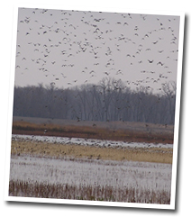 Waterfowl Management